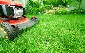 Lawn mower cutting green grass in backyard.Gardening background. poster