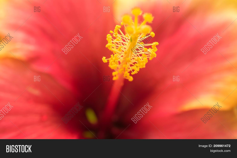 Extreme Close Image Photo Free Trial Bigstock
