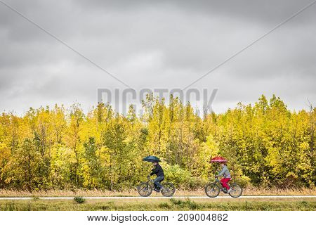 man and a woman each riding bicycles holding umbrellas above their  heads with beautiful yellow trees lining the trail under a dark gloomy skies on a wet fall day.