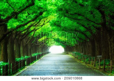 Beautiful Road Path Under Trees Arch Tunnel