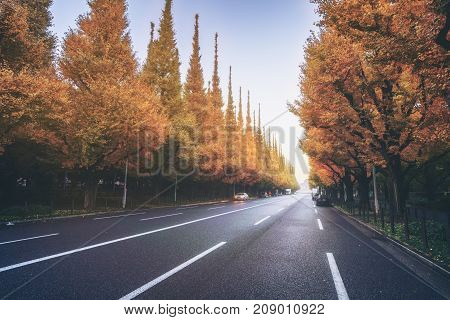 Beautiful Road With Trees On Sideroad