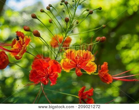 Close up of red guppy flower with green bokeh background