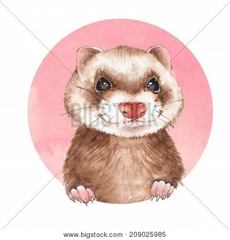 Cute ferret on pink background. Watercolor illustration