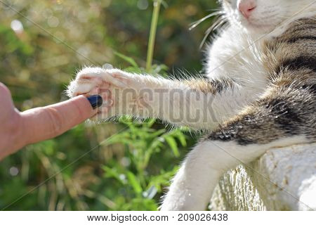 Hand and Paw of Cat touching outside, in the nature, like a symbol of friendship between human and pet