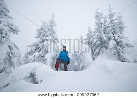 Spruce forest after snowfall. Tourist in a snowdrift near snowy trees. Winter landscape in the mountains
