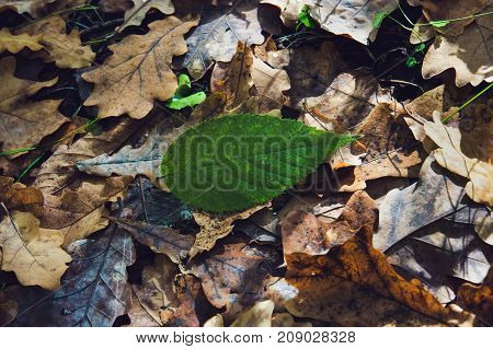 Dry Bed Of Colorful Autumn Background. Vintage Tone.
