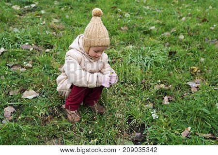 Little 4 year-old girl in a beige woolen hat and warm coat picking up last autumnal flowers on a lawn with green grass and dried leaves.