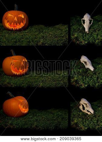 Halloween Scary Pumpkin Lights From Inside And Animal Skull On A Forest Moss.