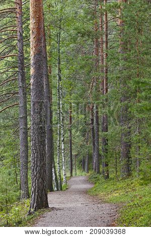 Pathway in the finnish forest. Finland nature background. Vertical