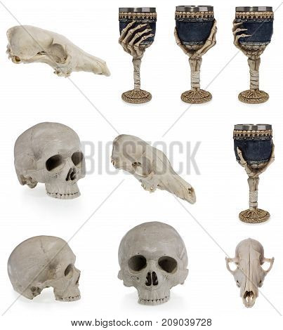 Halloween Human Skull, Animal Skull, Goblet With Skeleton Hand And Skulls.