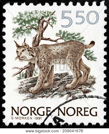 LUGA RUSSIA - AUGUST 20 2017: A stamp printed by NORWAY shows Lynx - medium-sized wild cat circa 1991