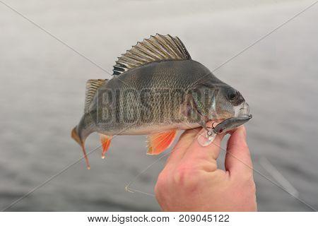 Summer fishing, perch fishing spinning reel on the lake