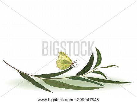 vector divider with butterfly and branch of eucalyptus