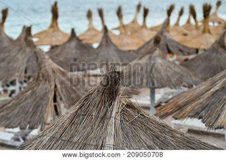 Lots of reed umbrellas at the seaside
