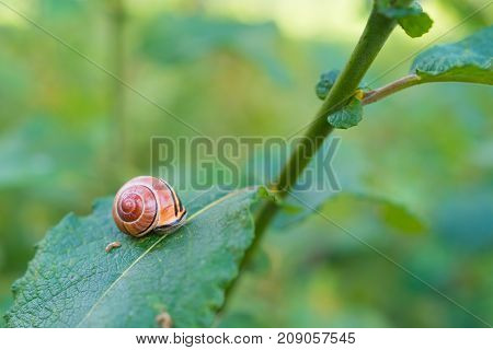 single snail on a leaf in fall time