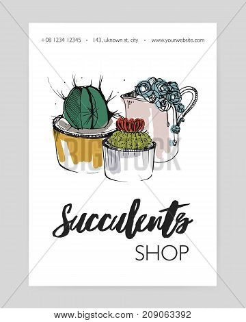 Leaflet template with several different succulents growing in pots and creamer hand drawn on white background and place for text. Potted desert plants, natural home decorations. Vector illustration