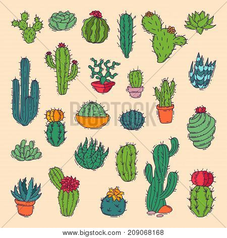 Cactus home nature vector illustration of green plant cactaceous tree with flower. Cute cartoon cactus nature cactaceous vector illustration.