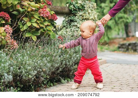 Adorable baby girl of 9-12 months old playing outside wearing pink body and joggers holding mother's hand. Child's first steps kid learning to walk
