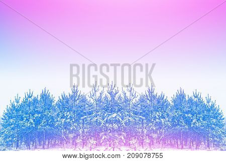Frozen winter forest with snow covered trees.