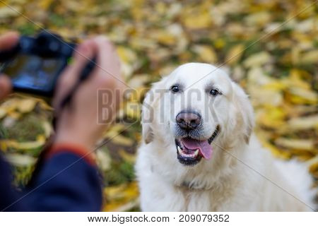 young man make photo of golden retriever with photocamera during autumn