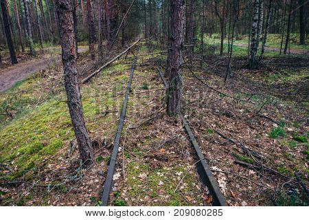 Forgotten railroad tracks in forest complex called Kampinos near Warsaw Poland
