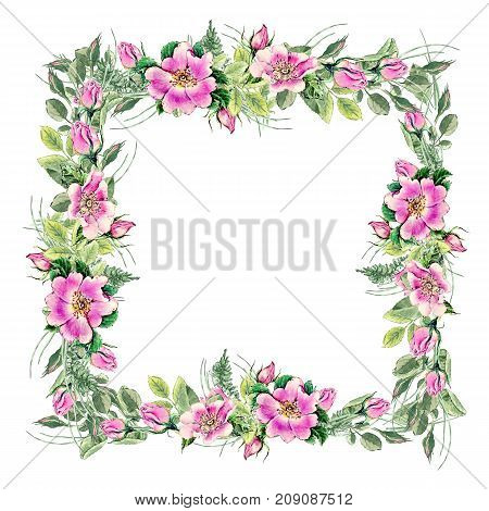 Banner with flowering pink roses names: dog rose, rosa canina, Japanese rose, Rosa rugosa, sweet briar, eglantine , isolated on yellow background. Watercolor hand drawn painting illustration.