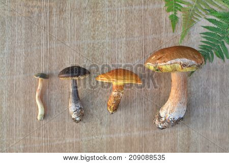 Various Edible Forest Mushrooms