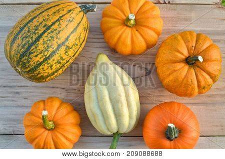 Little pumpkins and squashes on wooden background