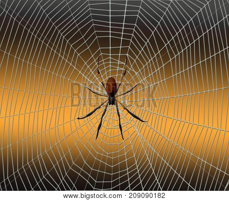 Spider on a spider web on a background.