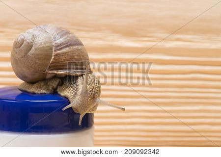 Snail Slime Cream for Skin and Spa Procedures close-up