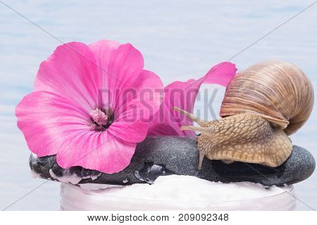 flower with a snail and its mucus for a cream for skin and spa procedures