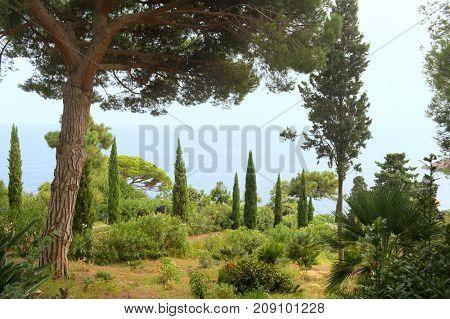 Nature garden with assortment cacti