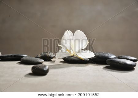 white orchid with pile of black stones on gray background