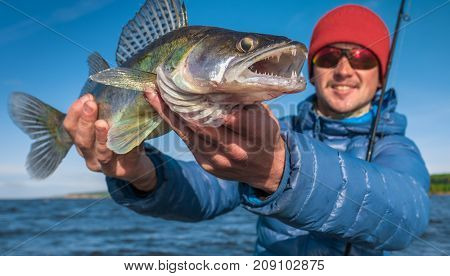 Young happy angler holds fish Zander (Sander lucioperca) with lake on the background