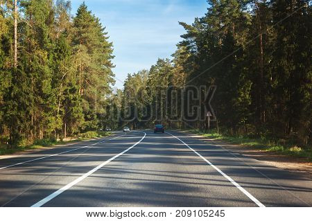road in the autumn spruce forest in Europe turn left
