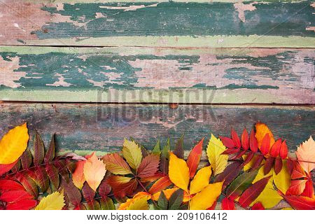 Autumn maple leaves over old wooden background