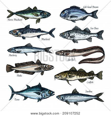 Fish, seafood isolated sketch set. Sea and ocean fish vector icon of tuna, cod, bass, bream, mackerel, eel, anchovy, sardine, hake, seabass and codfish marine animal species for fish market design