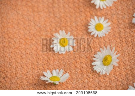 Background of beautiful daisies on a knitted orange texture in summer