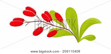 Isolated goji berries with leaves on white background.