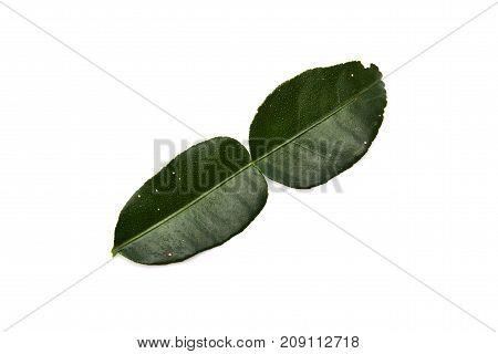 Kaffir Lime Leave