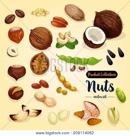 Nut, bean and seed vector set of almond, peanut, pistachio and hazelnut, walnut and cashew, sunflower and pumpkin seed, pecan, macadamia, coconut, brazil and pine nut for superfood design