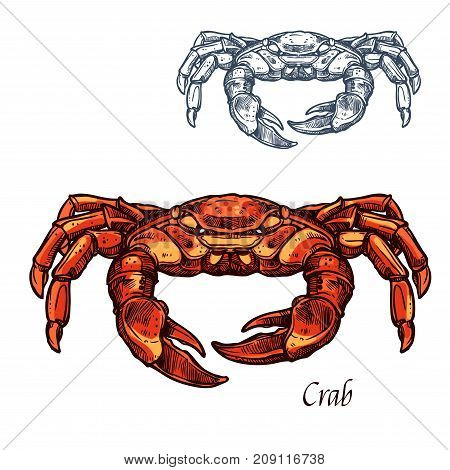 Crab sea animal sketch. Red crab or shellfish, lobster seafood animal and marine crustacean isolated vector icon for seafood restaurant symbol, fish market label design