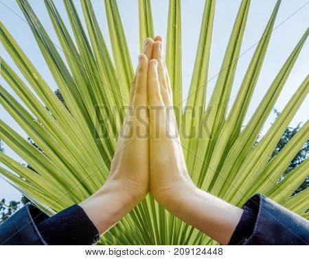 Raised hands pose (anjali mudra) palms pressing together at crown chakra on a fan palm tree background: concept of namaste