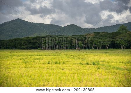 Beautiful landscape of a field in the background of a forest and mountains above a blue sky. Philippines, Puerto Princesa