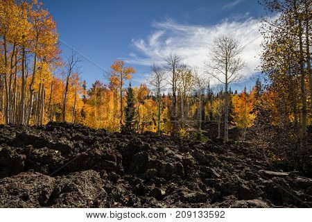 Bright and brilliant Dixie National Forest in the autumn with lava field in Utah near Cedar Breaks National Monument.