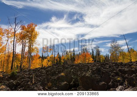 Magnificent vibrant view of Dixie National Forest lava field in Utah just outside of Cedar Breaks National Monument.