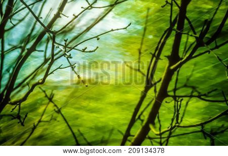 Artistic background with trees and moody green colors