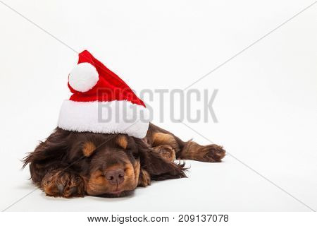 Cute Cocker Spaniel puppy dog sleeping wearing a Christmas Santa hat on a white background