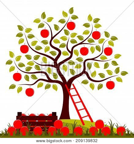 vector apple tree, wooden crate of apples and ladder isolated on white background