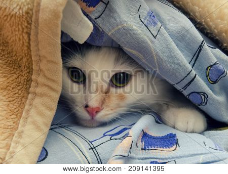 Little cat hiding under the sofa covers